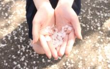 少女与樱花图片
