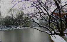 西安植物园图片