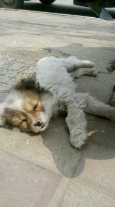 动物床睡觉图片