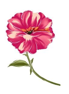花朵PSD
