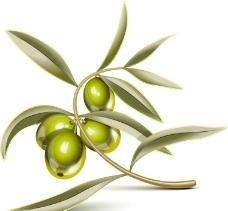 橄欖油橄欖樹橄欖葉圖片