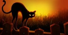 猫咪 诡异 背景图图片