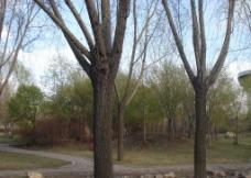 吉林大学校园风景图片