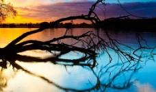 枯树倒影图片