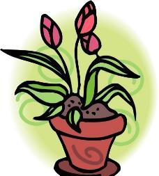 一盆花图片
