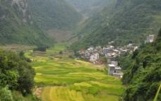 金秋稻田图片