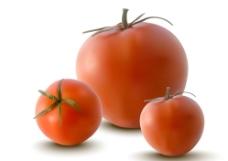 西紅柿圖片