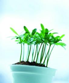 绿色 盆栽 植物图片