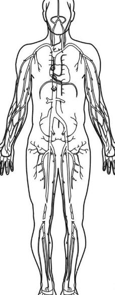 人体图图片