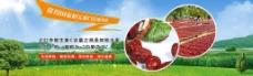 红枣网站banner图片