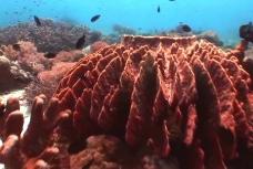 海底生物模板下载