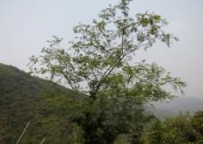 深圳朗唐山公园图片