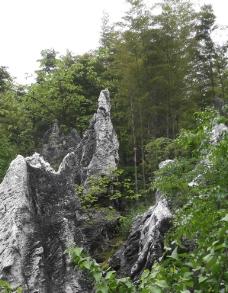 林中岩石图片