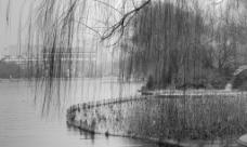 大明湖图片