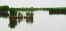 沼泽全景图片