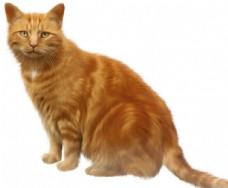 猫咪PNG图片