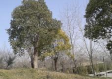 草地树木图片
