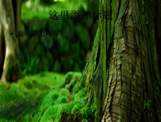 绿色树木苔藓植物