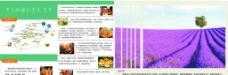 新疆旅游宣传单图片