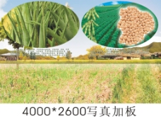 大豆被说明