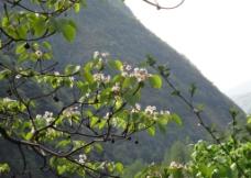 深山中的花图片