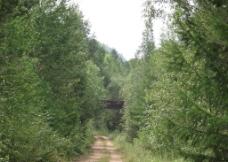 林中之路图片