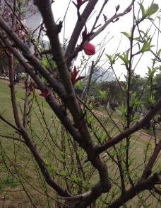 树之花图片