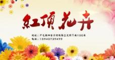 花卉广告图片