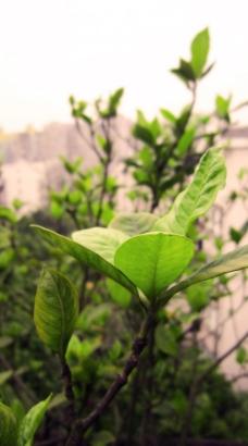微距树叶图片