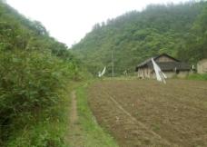 农村乡间小路图片