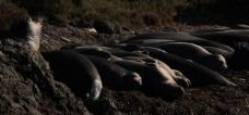 正在休息的海豹