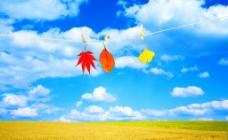 蓝天白云小麦丰收图图片