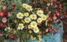 輪胎花朵圖片