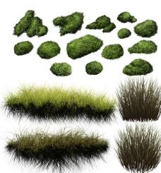 绿草苔藓图片