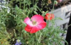 红色花儿图片