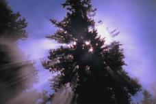 遮阳的大树