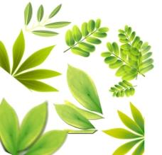 梦幻树叶 绿色图片