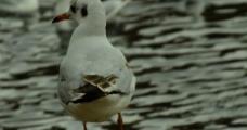 昆明 海鸥图片