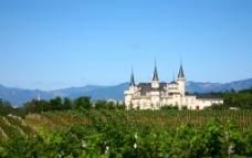 法国 葡萄庄园图片