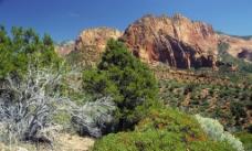 美国 锡安国家公园 科罗布峡谷图片