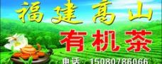 福建高山有机茶图片