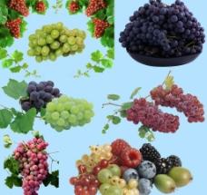 葡萄分层素材图片