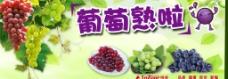 夏季葡萄熟啦海报图片