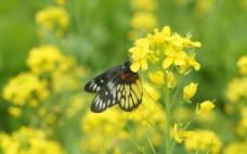 蝴蝶高清图片