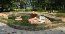 池塘蛙图片
