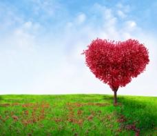 爱心大树图片