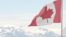 加拿大的国旗在风中股票的录像 视频免费下载