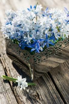 鲜花花朵图片