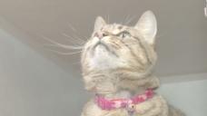 猫玩玩具库存录像的字符串 视频免费下载