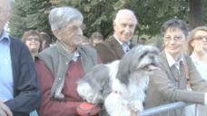 piedpont节希德和狗股票视频